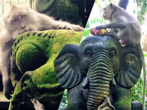 Ubud Monkey Forest, Unique Forest in Ubud Bali